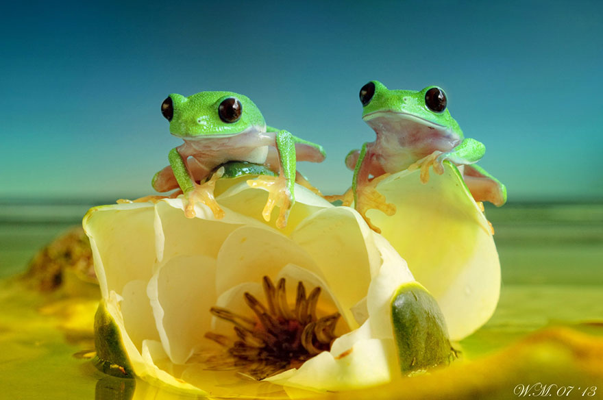 Frogs May Look Gross, But In These Photos, You'll Surely Love Them!