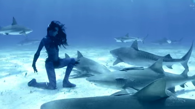 dance ocean shark - photo #13