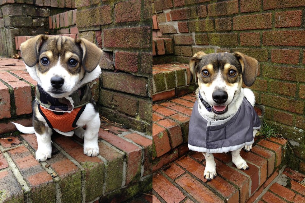Good Spot Beagle Adorable Dog - dogs-photo-recreations-4  Trends_648331  .jpg
