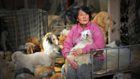 This Woman Travels 1,652 Miles And Pays $1,100 To Save Hundreds Of Dogs From China's Yulin Festival- A True Hero