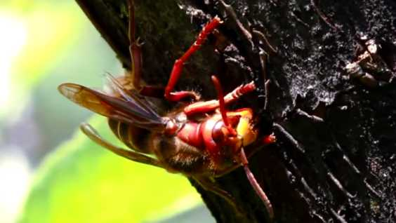 Get Rid Of Wasps Around Your House Easily Using This Simple And Effective Solution
