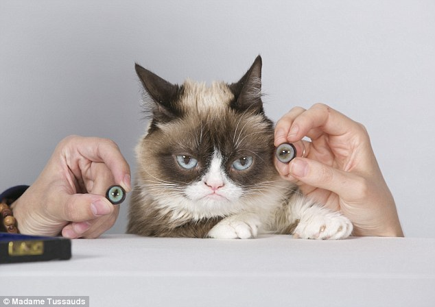 grumpy cat the first feline immortalized at wax museum and