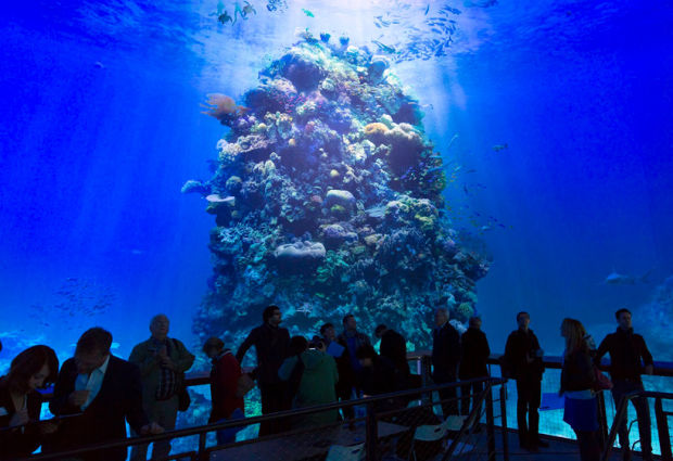 World's Largest 360° Panorama Of The Great Barrier Reef Installed In Germany Will Truly Leave You Breathless – Just Wow…