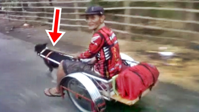 WATCH: Man In PH Lets His Pet Dog Carry A Cart Including Him