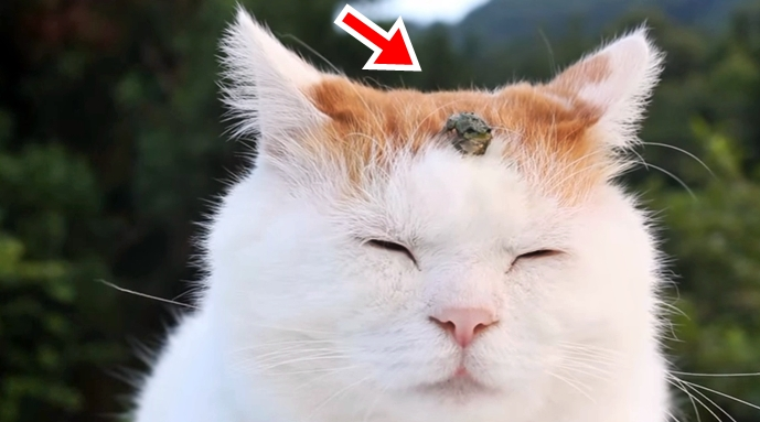 This Cat Just Found A New Bestfriend, A Frog – Just Lovely