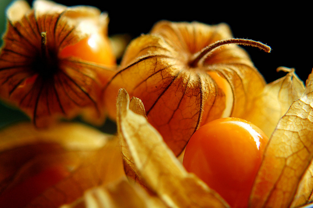 Amazing Health Benefits Of Cape Gooseberries You Probably Doesn't Know