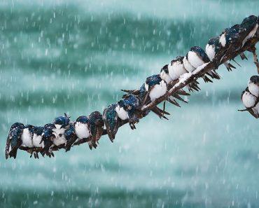 30 Heartwarming Photos Of Birds Cuddling Together For Warmth