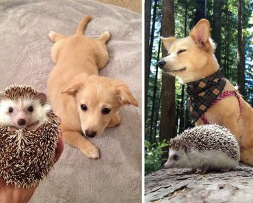 30 Adorable Before And After Pictures Of Animals Growing Up